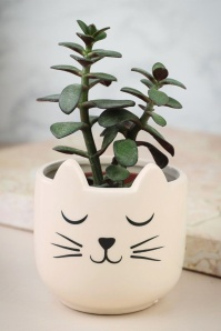 Sass & Belle Cat's Wiskers Mini Planter 290 59 25205 26042018 006