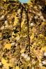 Louche 28288 Fiorella Long Yellow Dress 20190215 003W
